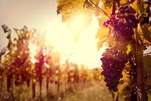 10 Vineyards Pouring the Best of the Hamptons & North Fork